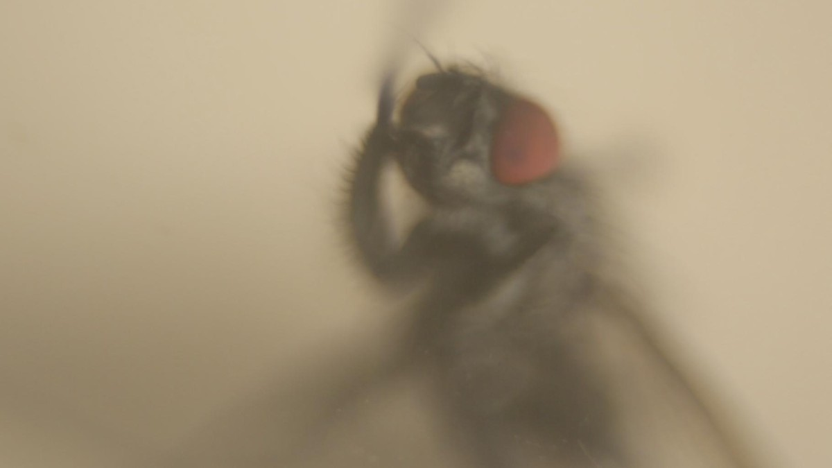 Insect O Cide_indieactivity